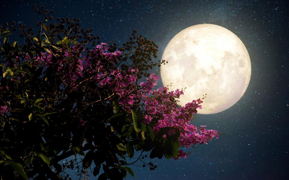 поиск тату-салонов фото весны луна дизайнерские